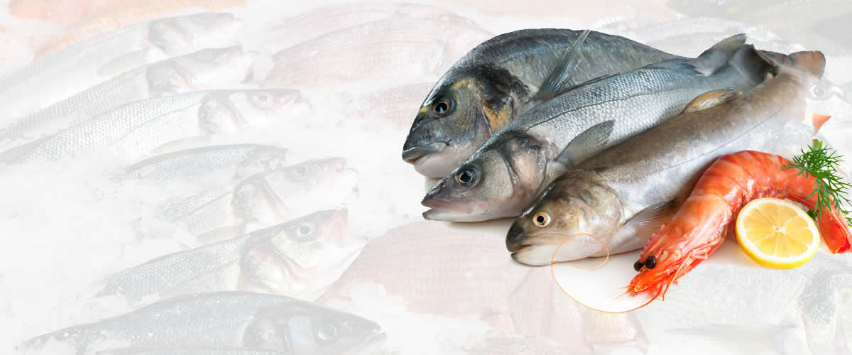 Fish Wholesale | Daily Stock
