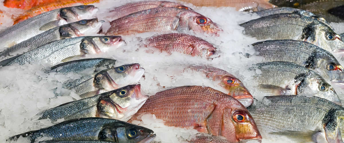 Freshest Quality Fish Ethically Caught!