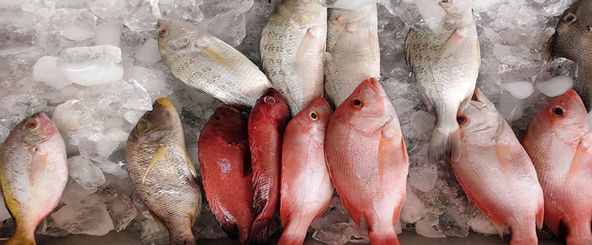 Fresh Fish Wholesale | La Mer